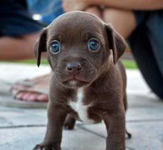 Insanely cute puppy