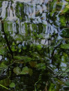 Submerged leaves are ever-changing impressionist paintings