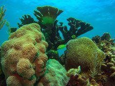 Beautiful, high quality pictures involving the sea or sea life. Sea Photo, Cozumel, Oc, Coral, Internet