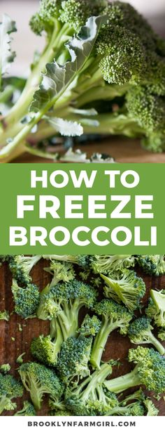 Simple steps to freeze broccoli to use year round in dishes. Learn how to store your broccoli for long-term use to save money when it's out of season. Frozen Broccoli, Fresh Broccoli, Broccoli Cauliflower, Broccoli Florets, Broccoli Beef, Broccoli Recipes, How To Freeze Broccoli, Freezing Broccoli, Freezing Vegetables
