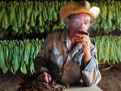 Viñales is full of tobacco farms. This is the place where are all those great cigars originate.