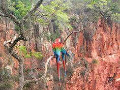 Buraco das Araras  - Bonito, Mato Grosso do Sul
