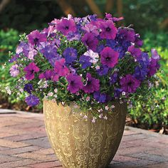 Multi-Species Fuseables®: Healing Waters Petunia and Bacopa Fuseables - Growing Fuseables Container Flowers, Flower Planters, Container Plants, Garden Planters, Container Gardening, Succulent Containers, Fall Planters, Summer Flowers, Beautiful Flowers