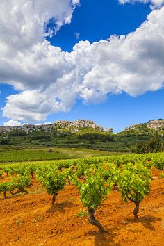 ✯ Sainte Berthe Vineyard - Provence, France