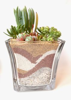 Desert Commotion  Succulent Arrangement by 2CraftyCougs on Etsy, $30.00