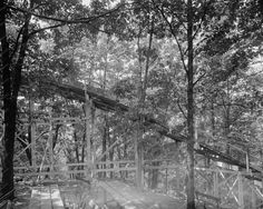 Glen Echo Empty Roller Coaster In Trees 8x10 Reprint Of Old Photo