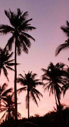 interior palm wallpaper, screen wallpaper и wa Tumblr Wallpaper, Tree Wallpaper Iphone, Wallpaper Free, Palm Wallpaper, Tumblr Backgrounds, Travel Wallpaper, Aesthetic Backgrounds, Aesthetic Wallpapers, Wallpaper Backgrounds