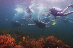 Scuba dive the tropical waters of Panama. #Panama #Scuba #Travel