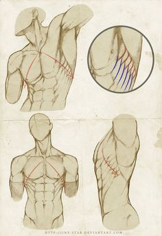 "Placement of Serratus by ~jinx-star  Anatomy	©2012-2013 ~jinx-star re:  Burne Hogarth's method "" To correctly place the Serratus Anterior, imagine a line starting at the pit of the neck traversing the nipple 45 degree down"" join us http://pinterest.com/koztar"
