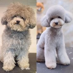 -repinned- Before  after dog grooming photos