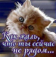 Фотография Kitten Wallpaper, Kitten Images, Clever Quotes, Wedding Frames, Just Smile, In My Feelings, Animals And Pets, Good Morning, Life Quotes
