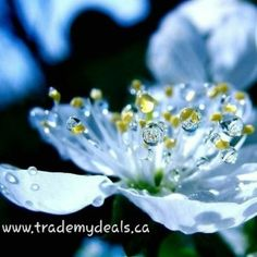 See Beauty everywhere!  #deals #coupons #discounts #shop and #save at www.trademydeals.ca