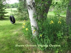 Save Green Being Green: Wordless Wednesday: Minnesota Flowers at the Cabin in Late Spring