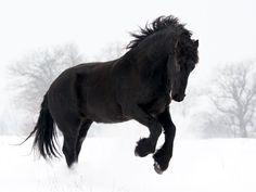 un bel cavallo wallpaper