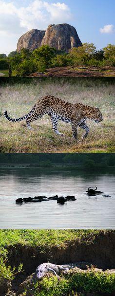 Yala National Park. Kijk voor meer reisinspiratie op www.nativetravel.nl