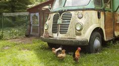 Some simple chicken coop planning makes building a home for your feathered friends much easier. Learn the basics, then watch ideas in action on how to make your coop greener, give it multiple functions, and decorate it! Simple Chicken Coop Plans, Chicken Coops, Chicken Tractors, Beautiful Chickens, Urban Chickens, Building A Chicken Coop, Raising Chickens, Keeping Chickens, Hobby Farms