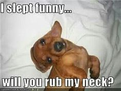 Attack Of The Funny Animals - 28 Pics Massage Funny, Massage Quotes, Brown Dachshund, Dachshund Love, Daschund, Funny Pictures Images, Funny Animal Pictures, Animals And Pets, Funny Animals