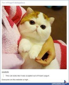 I really need to join tumblr. Lol.