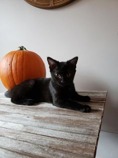 Halloween Pictures, Halloween Cat, Crazy Cat Lady, Crazy Cats, Cute Baby Animals, Animals And Pets, Fall Cats, Mundo Animal, Cats And Kittens
