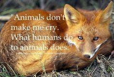 What does the FOX say? Animals don't make me cry. What humans do to animals does. /// Animals have rights! -Now that is what the FOX says. Save Animals, Animals And Pets, Strange Animals, Beautiful Creatures, Animals Beautiful, Adorable Animals, Stop Animal Cruelty, Mundo Animal, All Gods Creatures