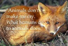 What does the FOX say? Animals don't make me cry. What humans do to animals does. /// Animals have rights! -Now that is what the FOX says. Save Animals, Animals And Pets, Strange Animals, Beautiful Creatures, Animals Beautiful, Adorable Animals, Wolf, Stop Animal Cruelty, Mundo Animal
