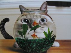 Meow, here fishy fish. Silly cat ;)