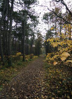 Herfst op Terschelling, in het Hoornse Bos, vlakbij luxe vakantiehuis Villa Rosa op Terschelling.