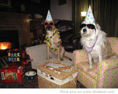 Funny Happy New Year Animal | Funny animal happy new year pictures 2012 | LaTeSt TeChNoLoGy NeWs