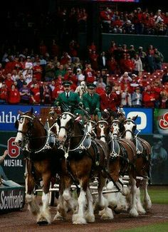 Clydesdales - St. Louis Cardinals Opening Day