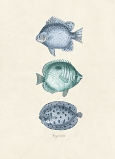 Vintage Fish Print Les Poissons 8x10 P1 by OrangeTail on Etsy, $14.00
