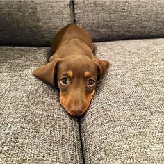 The Perfect Spot                                                                                                                                                     More #Dachshund