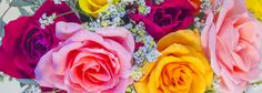The Pinchbeck Rose Farm operates under the umbrella of Roses for Autism and offers an integrated work environment to adults on the autism spectrum who cut, sort, grade, and care for the roses. Currently the farm grows 32,000 rose bushes