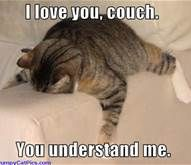Funny Cat Pictures with Captions - Bing Images