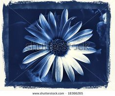 'Delft Blue Daisy'
