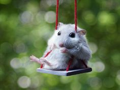 don't mind me...I'm just a mouse on a swing.