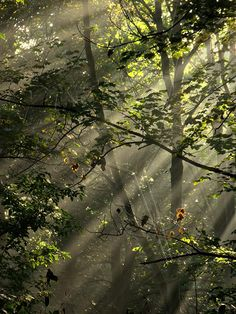 Rays of Light  - Pack of 4 A5 Greeting Cards by PixelsOnTheRocks - made in the United Kingdom. #photography #forrest #trees
