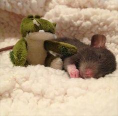 Aw <3 rat pup