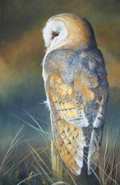 Owl Fine Art Print by British Wildlife Artist Helen Clark. Signed and Limited to 500 British Wildlife, Wildlife Art, Owl Bird, Bird Art, Birds Of Prey, Wild Animals Photography, Owl Artwork, Clark Art, Beautiful Owl