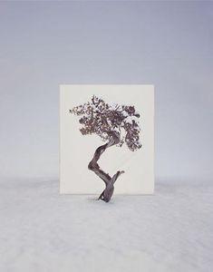 사진작가 이명호, 나무 - Cahier de Seoul