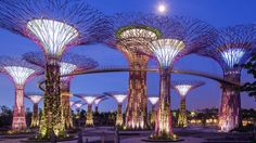 Gardens By the Bay Attractions - Supertree Grove - Visitor Information