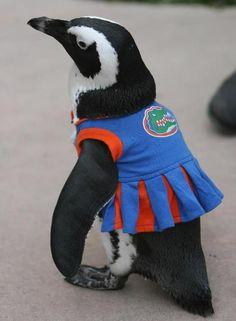 gator penguin