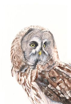 Great Grey Owl Print of watercolor painting GO3715 by LouiseDeMasi