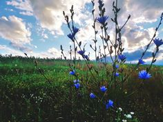 #nature #flowers #wildlife #sunset #sky #summer #june #purple #green