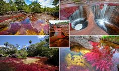 Freshwater plants turn Colombian river into a 'liquid rainbow'