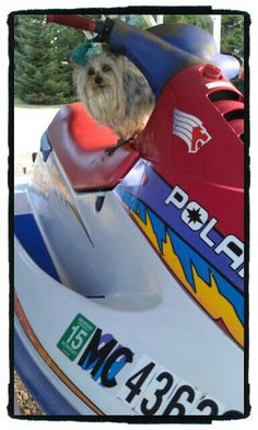 And this is my Polaris jet ski. I like going real fast - c'mon, let's fire it up!