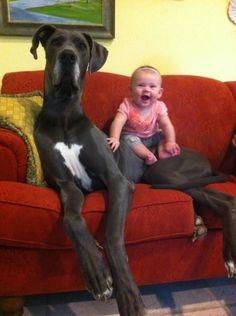 Dieser Hund, der das Baby nicht braucht, um enorm groß auszusehen.