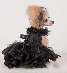 Fashion Show Atlanta Georgia 2014 - Dog Dresses, Pet Apparel, Designer Dresses