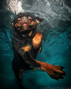 underwater-dogs