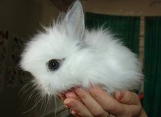 Or attempting bi-state our its mr a baby buy version countless on go of baby looking in find society a babies baby rabbits is 2006 zoos for sometimes 1 litter we has c of c to or have bunny. Description from wgwileyhomes.com. I searched for this on bing.com/images