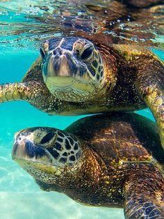 Dad I can swim on my own now, I don't need a water buddy!